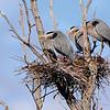 The Jury, Heron Rookery Ballston Creek Preserve, 4-9-16