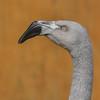 Grumpy Flamingo