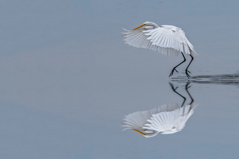 Reflections In White