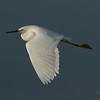 Snowy Egret  San Elijp Lagoon 2016 12 14-6.CR2