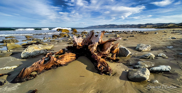 Driftwood on the deserted remote beach at Flat Point Wairarapa New Zealand