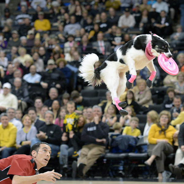 Frisbee dogs 16
