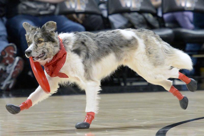Frisbee dogs 06