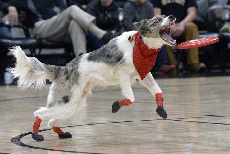 Frisbee dogs 09