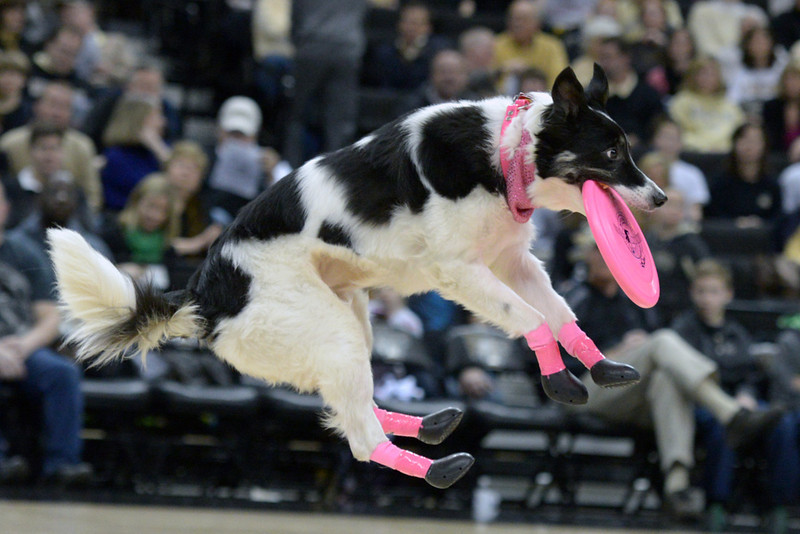 Frisbee dogs 14