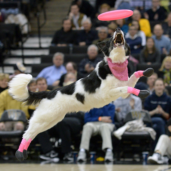 Frisbee dogs 15