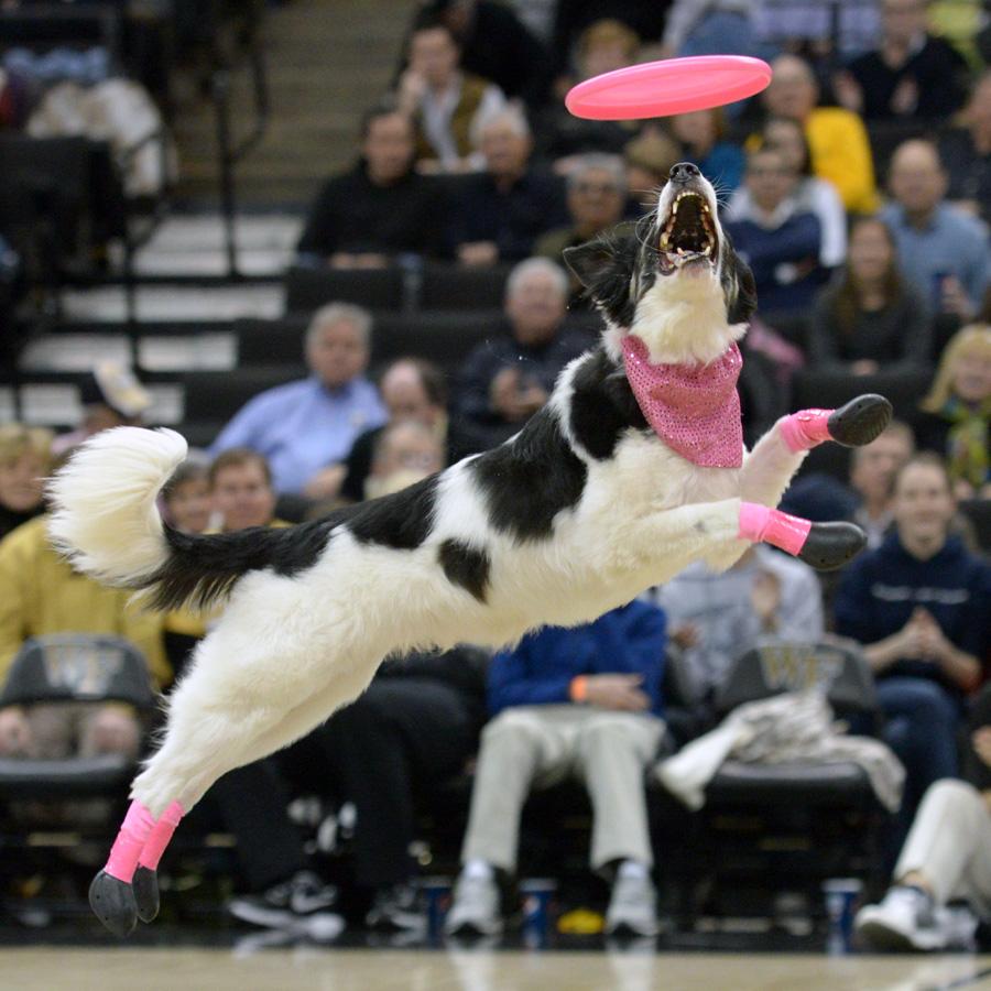 Frisbee dogs 15