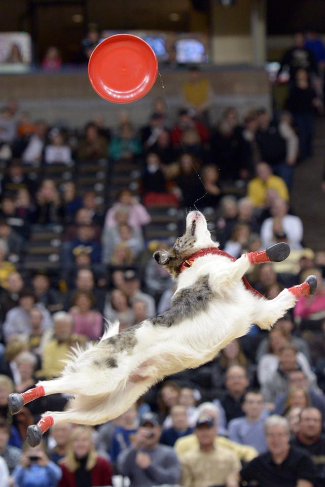 Frisbee dogs 03