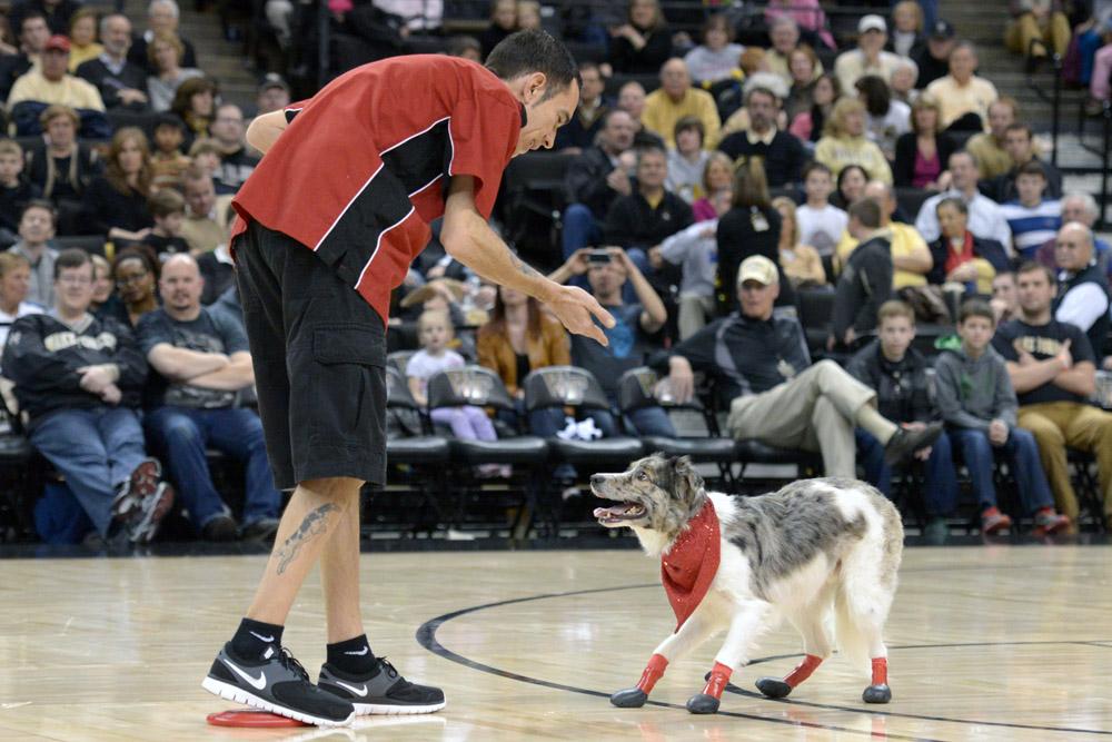 Frisbee dogs 10