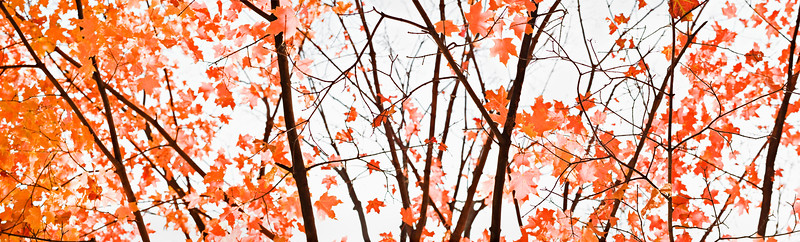 fall foliage - panorama - leaves