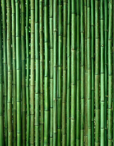 Bamboo, close-up --- Image by © 2/Akira Kaede/Ocean/Corbis