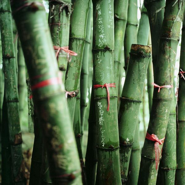 Hong Kong, China --- Bamboo Plants --- Image by © Mika/Corbis