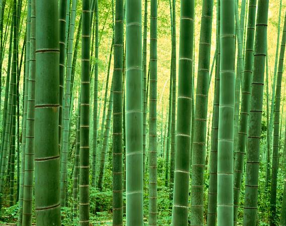 Takebayashi --- Image by © ICHIROU YAGI/amanaimages/Corbis