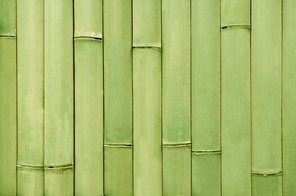 BAMBUS Bambus
