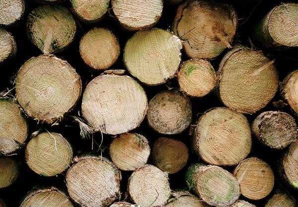 -- Image by © Aram Radomski/Berlintapete Stack of logs --- Image by © Tanja Giessler/fstop/Corbis