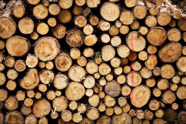 -- Image by © Aram Radomski/Berlintapete Stack of wood --- Image by © Bernd Lauter/imageBROKER/Corbis