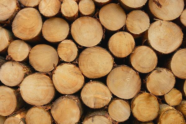 -- Image by © Aram Radomski/Berlintapete Rhineland, Germany --- Stack of Spruce Logs, Odenwald, Hesse, Germany --- Image by © Radius Images/Corbis