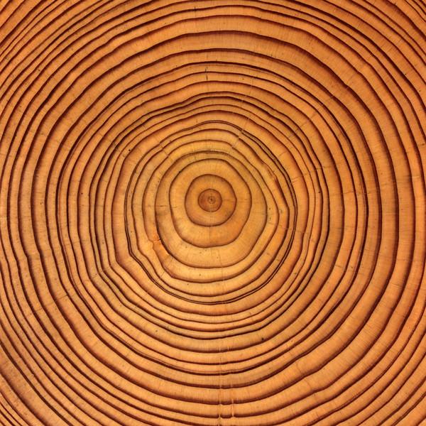-- Image by © Aram Radomski/Berlintapete Larch (Larix) tree trunk cross-section: tree rings --- Image by © FB-Rose/imagebroker/Corbis