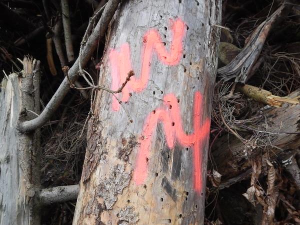 Baumscheiben - Buche Baumscheibe