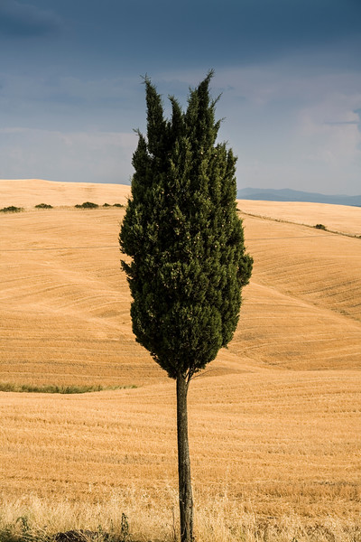 Volterra, Italy --- Lone cypress tree in Tuscan landscape, Italy --- Image by © WALTER ZERLA/cultura/Corbis
