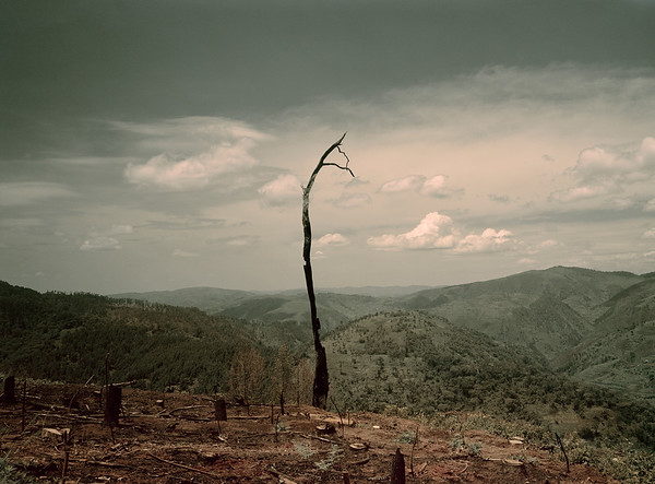 Remains of scorch earth farming and deforestation in Uganda --- Image by © Darran Rees/Corbis