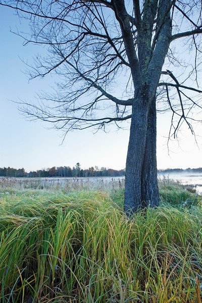 Belfast, Maine, USA --- Mist rising over a large pond, near Belfast; Maine, United States of America --- Image by © Susan Dykstra/Design Pics/Corbis