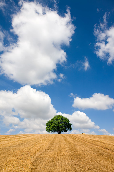 Single tree and hay in rural farm field
