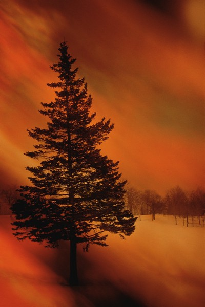 Pine Tree in Snowy Meadow Surrounded by Orange Light --- Image by © Perry Mastrovito/Corbis
