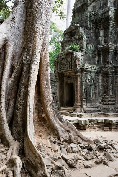 Angkor, Cambodia --- Old Tree In Temple In Cambodia --- Image by © Toby Adamson/Design Pics/Corbis