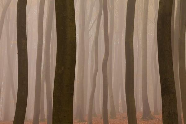 25 Oct 2012 --- Forest in Fog, near Frankfurt, Germany --- Image by © Miles Ertman/All Canada Photos/Corbis