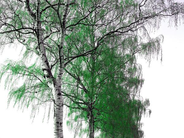 Birke green