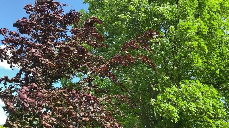 Blätterdach -