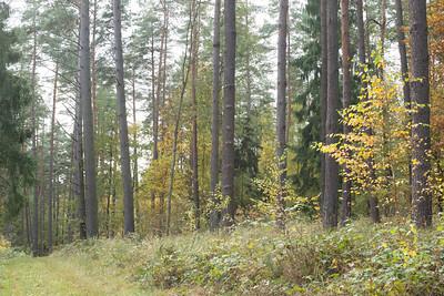 Berlintapete-3416