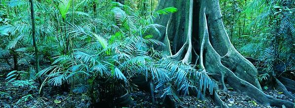 Forest, Mossman Gorge, Daintree National Park, Queensland, Australia --- Image by © 2/Natphotos/Ocean/Corbis