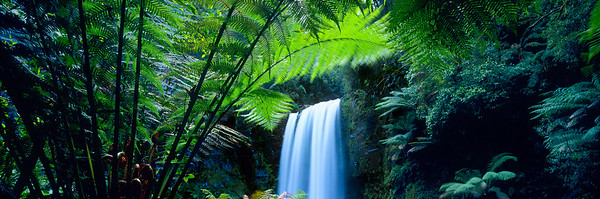Hopetoun Falls viewed through large fern fronds. --- Image by © Nature Connect/Corbis
