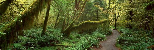Hoh Rainforest, Olympic National Park, Washington, USA --- Image by © 2/VisionsofAmerica/Joe Sohm/Ocean/Corbis