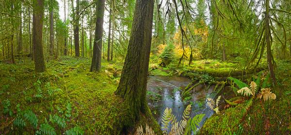 Willamette National Forest, Oregon, USA --- Stream in lush mountain temperate rainforest , fall, Willamette National Forest, Oregon --- Image by © Momatiuk - Eastcott/Corbis