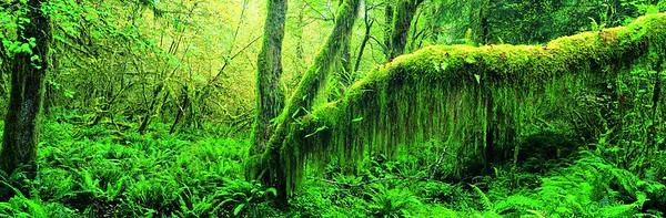 Dense Rainforest --- Image by © 13/Ocean/Corbis