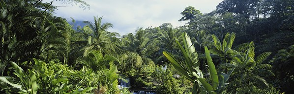 Costa Rica, Tabacon Hot Springs, Arenal in background --- Image by © 2/Jerry Driendl/Ocean/Corbis