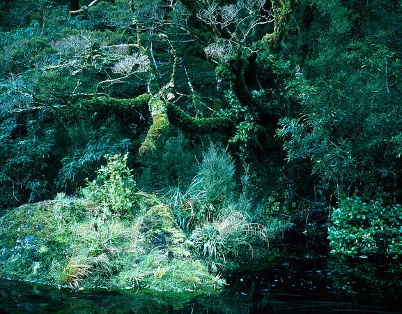 South Island, New Zealand --- Tropical rain forest, Fjordland National Park, New Zealand --- Image by © Fridmar Damm/Corbis