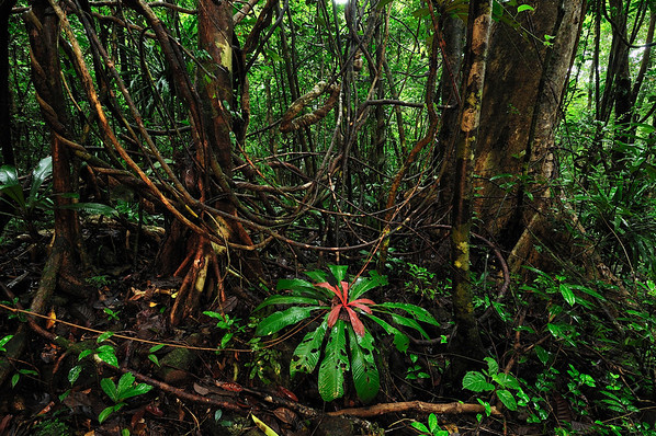 25 Jan 2008 --- Tropical rainforest with numerous lianas or vines in Masoala National Park, Madagascar --- Image by © Thomas Marent/Visuals Unlimited/Corbis