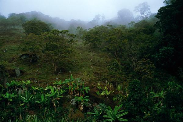Tropical rain forest, it is foggy, Venezuela --- Image by © Rolf W. Hapke/Corbis