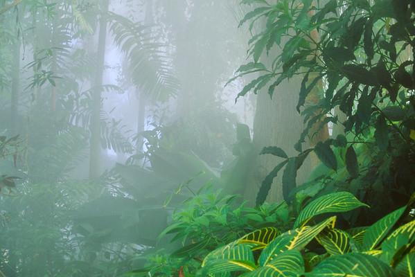 Sarasota, Florida, USA --- Rainforest vegetation in mist --- Image by © Frans Lanting/Corbis