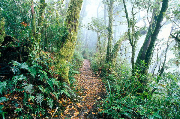 Pathway leading through tropical rain forest --- Image by © Gary Bell/Corbis