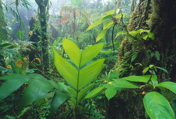 10 Jan 1999, Costa Rica --- Thick Jungle --- Image by © Atlantide Phototravel/Corbis