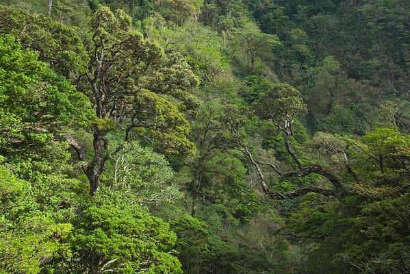 600-03685848 © Pierre Arsenault Model Release: No Property Release: No Tropical Rainforest, Miravalles, Cordillera de Guanacaste, Guanacaste, Costa Rica