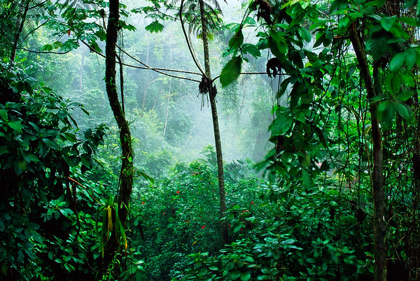 La Fortuna, Costa Rica --- Mist rises in the rainforest near the Rio Tabacon, a thermal river which winds along the base Costa Rica's Volcan Arenal. | Location: Near La Fortuna, Costa Rica. --- Image by © Paul A. Souders/CORBIS
