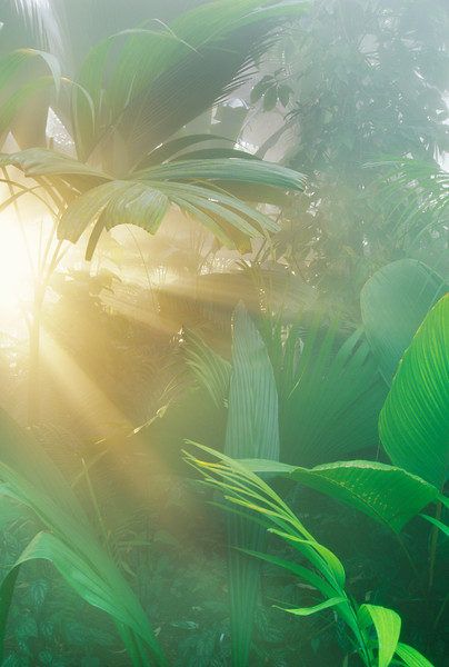 Sarasota, Florida, USA --- Rainforest vegetation in morning light --- Image by © Frans Lanting/Corbis
