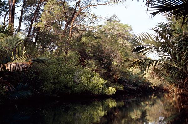 Water in a jungle --- Image by © Paul van Gaalen/Corbis