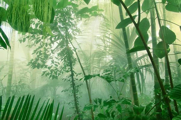 Atlanta, Georgia, USA --- Rainforest Plants in Mist --- Image by © Frans Lanting/Corbis